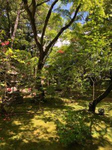 牧野植物園隣の竹林寺。苔と新緑が息を呑むほど美しかった